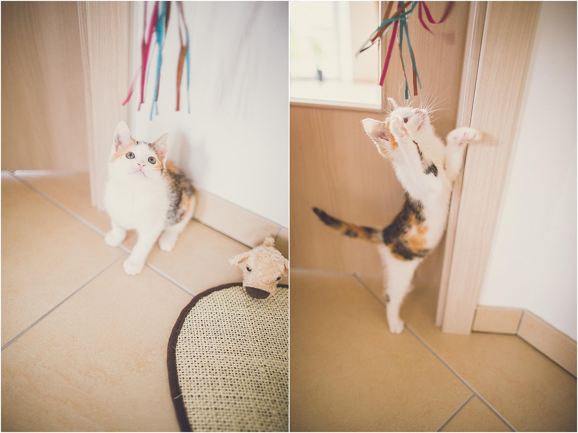 2014-07-23_0004 Paula & Frieda, zwei bezaubernde Kitten