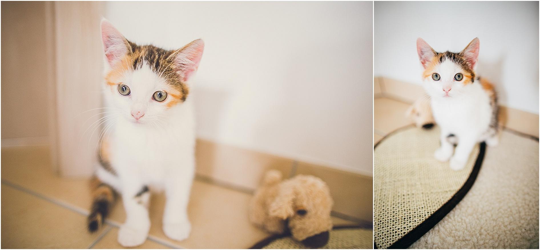 2014-07-23_0006 Paula & Frieda, zwei bezaubernde Kitten