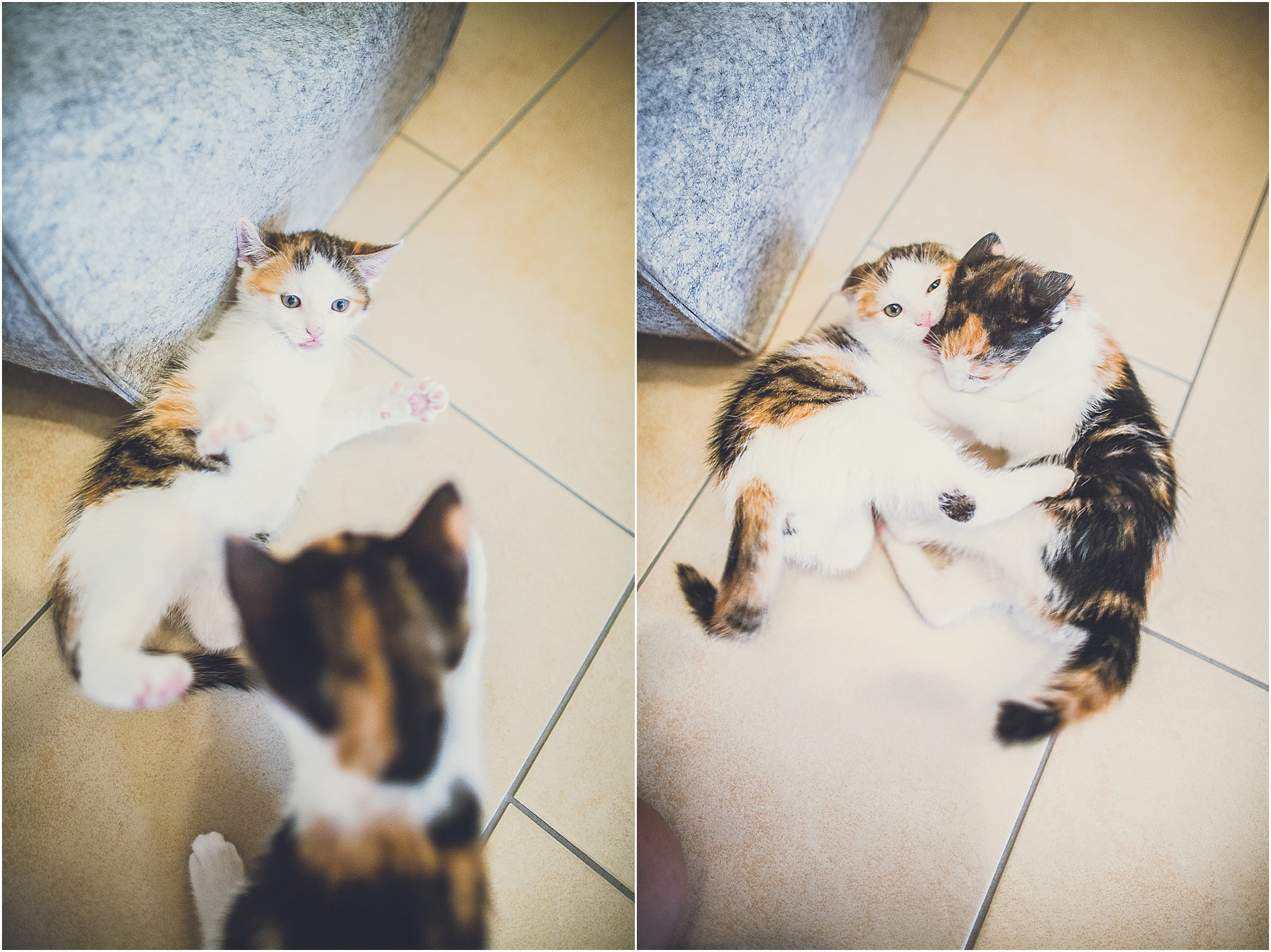 2014-07-23_0011 Paula & Frieda, zwei bezaubernde Kitten